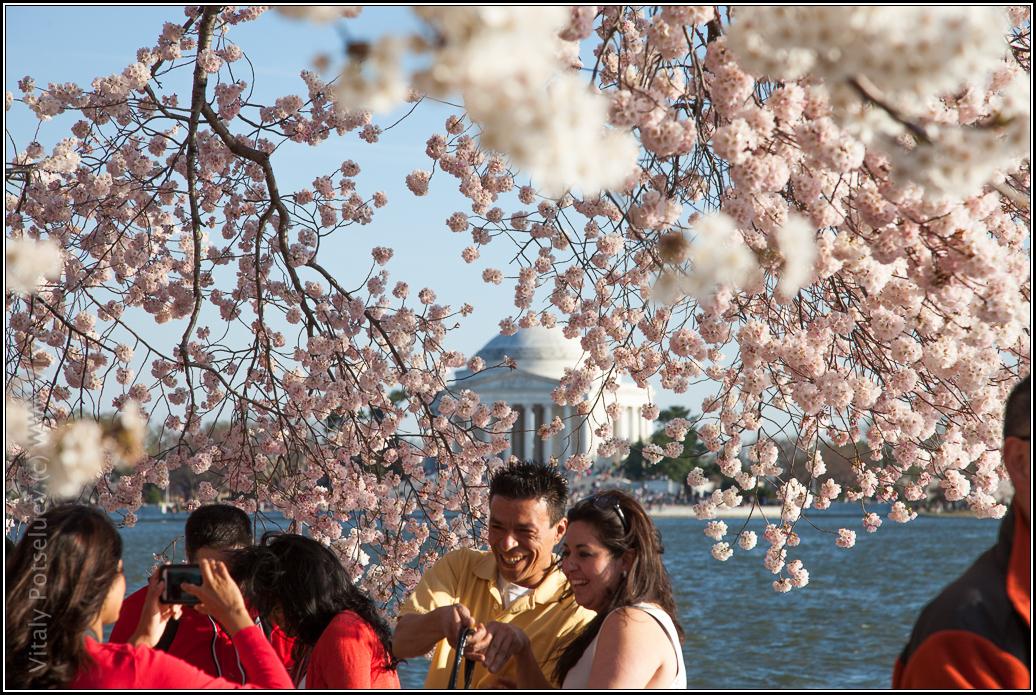 Washigton DC, cherry blossom 2014